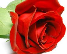 рецепт ванны с лепестками роз