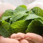 Применение масла мяты для ухода за кожей лица