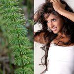 Полевой хвощ для слабых и ломких волос