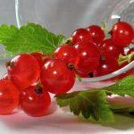 Домашние средства из красной смородины для лица