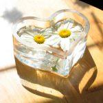 Как приготовить косметический лёд из ромашки для лица