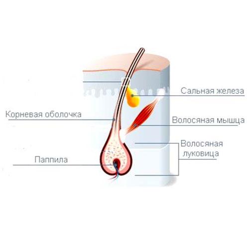 Лечение волос народными средствами против выпадения